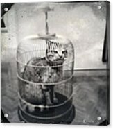 Cat In Cage Acrylic Print