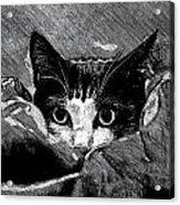 Cat In Hiding Acrylic Print