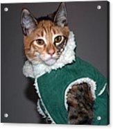Cat In Patrick's Coat Acrylic Print