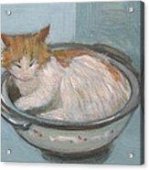 Cat In Casserole  Acrylic Print