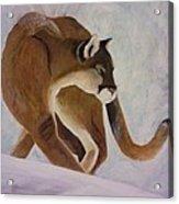 Cat In Snow Acrylic Print