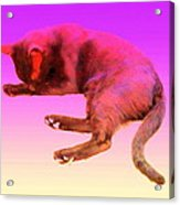 Even If Your Little Cat Is Resting In Space Or In Heaven She Still Loves You  Acrylic Print