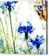 Cat In The Cornflowers Acrylic Print