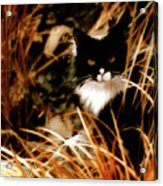 Cat In The Golden Grass Acrylic Print