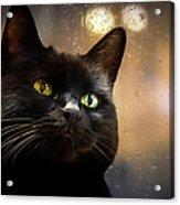 Cat In The Window Acrylic Print by Bob Orsillo