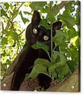 Cat In Tree Acrylic Print
