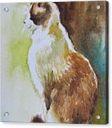 White And Brown Cat Acrylic Print