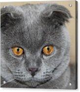 Cat Martin Acrylic Print