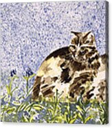 Cat Mint Wc On Paper Acrylic Print