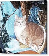 Cat Motif Acrylic Print