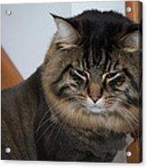 Cat Nap Time Acrylic Print