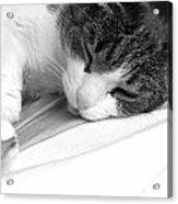 Cat Acrylic Print by Niki Mastromonaco
