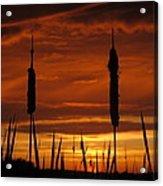 Cat Nine Tails Sunset Acrylic Print