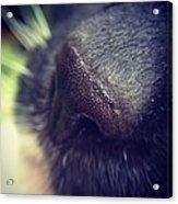 Cat Nose Acrylic Print