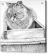 Cat On A Box Acrylic Print