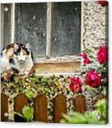 Cat On A Sill Acrylic Print