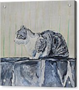 Cat On A Stone Wall Acrylic Print