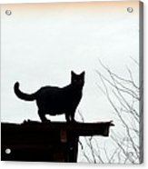 Cat On A Tin Roof 2 Acrylic Print