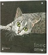 Cat On Black Acrylic Print by Bill Hubbard