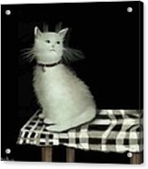 Cat On Checkered Tablecloth   No. 2 Acrylic Print