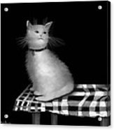 Cat On Checkered Tablecloth   No. 3 Acrylic Print