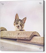 Cat On The Hot Tin Roof Acrylic Print