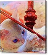 Cat On The Stairs Acrylic Print