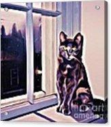 Cat On Window Sill Acrylic Print