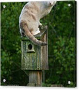 Cat Perched On A Bird House Acrylic Print