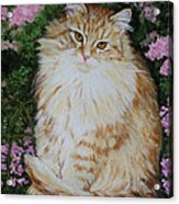 Kitten Cat Painting Perfect For Child's Room Art Acrylic Print