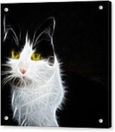 Cat Portrait Fractal Artwork Acrylic Print