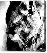 Cat Profile Acrylic Print
