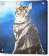 Cat Profile Acrylic Print