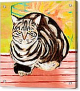 Cat Relaxing Acrylic Print