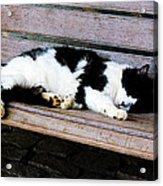 Cat Sleeping On Bench Acrylic Print