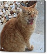 Cat Talk Acrylic Print by Ella Char