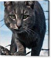 Cat Tree Acrylic Print