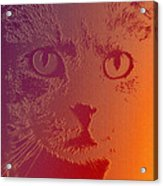 Cat With Intense Stare Abstract  Acrylic Print