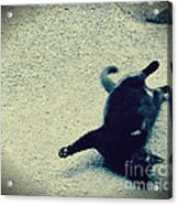 Cat Yoga Acrylic Print