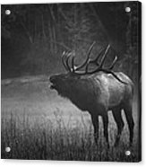 Cataloochee Bull Elk Acrylic Print