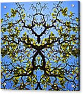 Catalpa Tree Acrylic Print