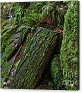 Cataracts Canyon Mossy Log  Acrylic Print
