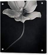 Catch The Light Acrylic Print