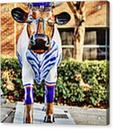 Catching Bull Acrylic Print by Emily Kay