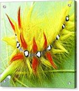 Caterpillar 2 Acrylic Print