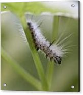 Caterpillar's Spring Green Acrylic Print