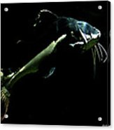 Catfish Are Jumpin Acrylic Print