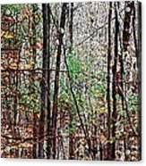 Cathedral In The Woods Acrylic Print