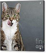 Catlick Acrylic Print