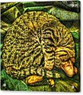 Catnappin' On A Cold Rainy Sunday Acrylic Print